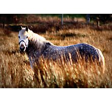Camouflage Connemara Pony Photographic Print