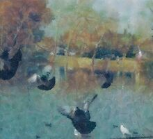 Pidgeons at Lake Park by Joni  Rae