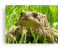 Mister Toad Canvas Print