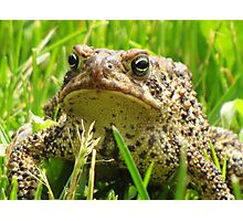 Mister Toad Photographic Print