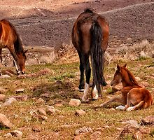 Little Angel, Angelina (foal) & Nanna Big Angel by Ellen  Holcomb