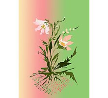 ... flower ... Photographic Print