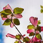Transparent Flowers by daphsam