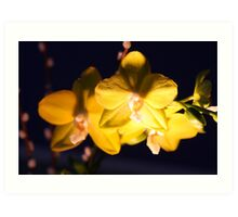 Yellow Orchids In The Dark Art Print