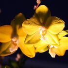 Yellow Orchids In The Dark by daphsam