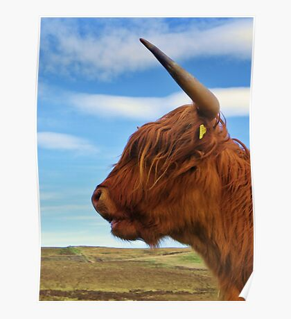 Hold Fast - Highland Cow Poster