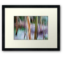 Winter Trees - Killarney National Park Framed Print