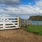 The white gate by Jan Pudney