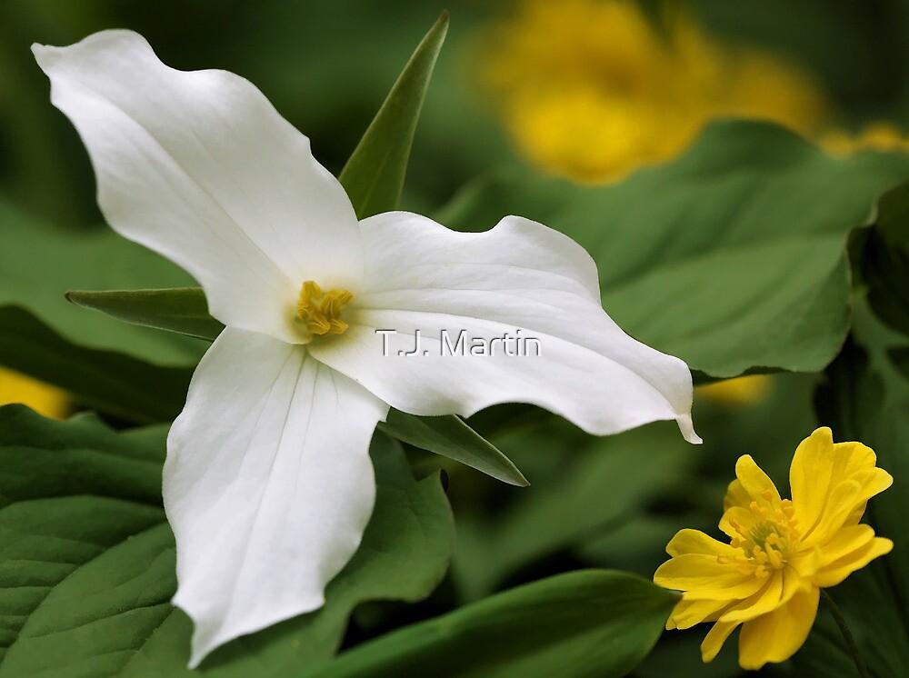 White Trillium and Yellow Anemone by T.J. Martin