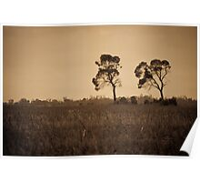 Emu Apple Trees - Vicenza, QLD Poster