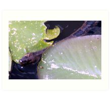 Look What's in the Lily Pads Art Print
