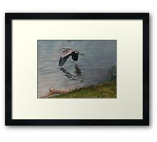 Codorus Great Blue Heron Framed Print