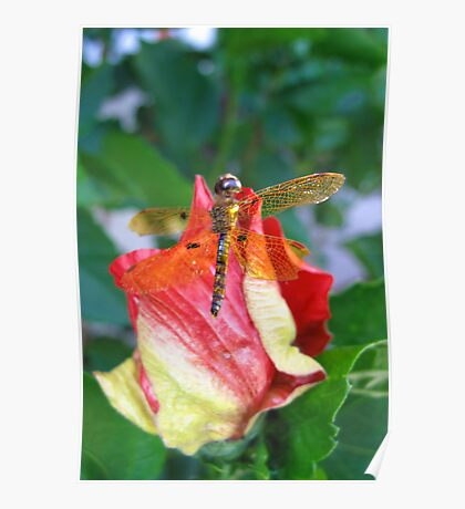 Colorful nature dragon fly. Poster