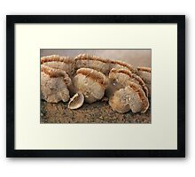 Fungis and Stripes Framed Print