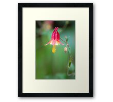 Pink Tinkerbell Framed Print
