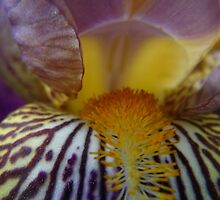 Iris, Goddess of the Rainbow by Betty Mackey