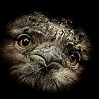 Tawny Frogmouth by Su Walker