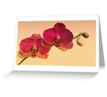 Red Orchids Greeting Card