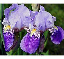 Iris Duo Photographic Print