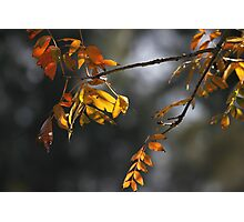 Autumn Light Photographic Print