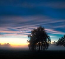 Weeping Willow in the Mist by KellyHeaton