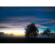 Weeping Willow in the Mist Photographic Print