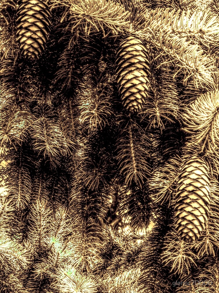 Pine Tree and Cones - Different aspect by glennc70000