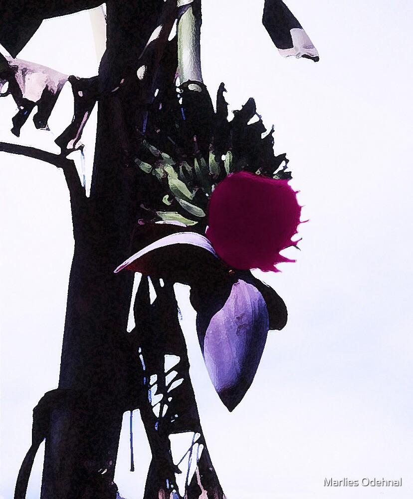 Banana blossom 2 by Marlies Odehnal