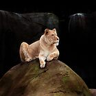 Lion on a rock by jaycob