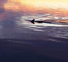 Dolphin Sunset - Leschenault Estuary WA by Chris Paddick