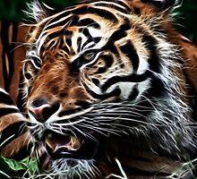 Tiger by Sam Smith
