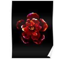 Crimson Bloom Poster