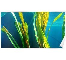 Underwater Plant Life number 2 Poster