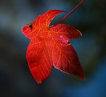 """Autumn Signature"" by Heather Thorning"