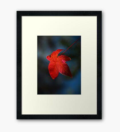 """Autumn Signature"" Framed Print"