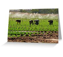 Lettuce patch 2## Greeting Card