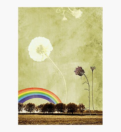 Thistle & Dandelion Photographic Print