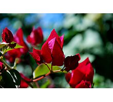 Red Spade Photographic Print