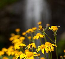 Flowers -N- Falls by Forrest Tainio