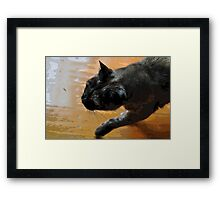 puss on a mission Framed Print