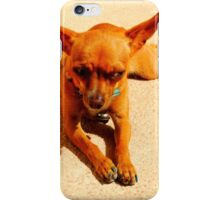 Skeptical Chihuahua iPhone Case/Skin