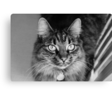 Wide Eyed Molly Canvas Print
