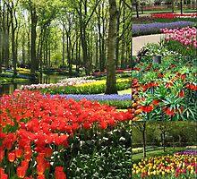 A Dutch Spring Collage by MidnightMelody