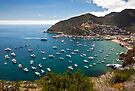 Catalina Island Shoreline by Eddie Yerkish