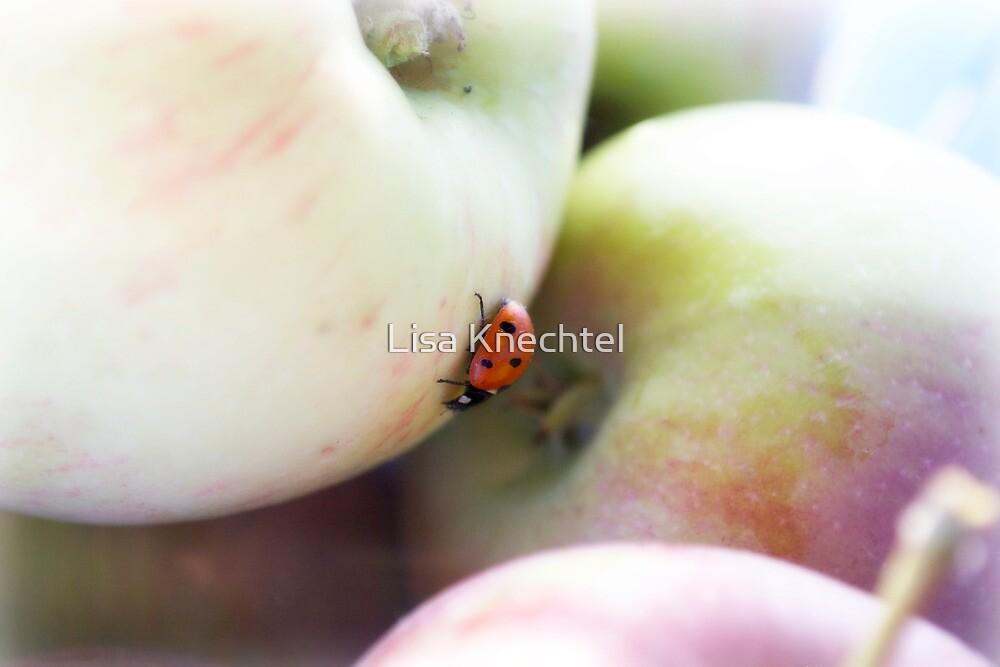 Lady on the Macs by Lisa Knechtel