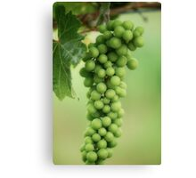 Wine Before Picture Canvas Print
