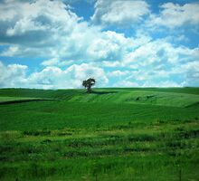 Summer Country in Iowa by Linda Miller Gesualdo