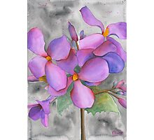 Purple Cluster Photographic Print