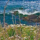 Daisy Coast  by heatherfriedman