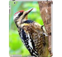 Caribbean Woodpecker iPad Case/Skin